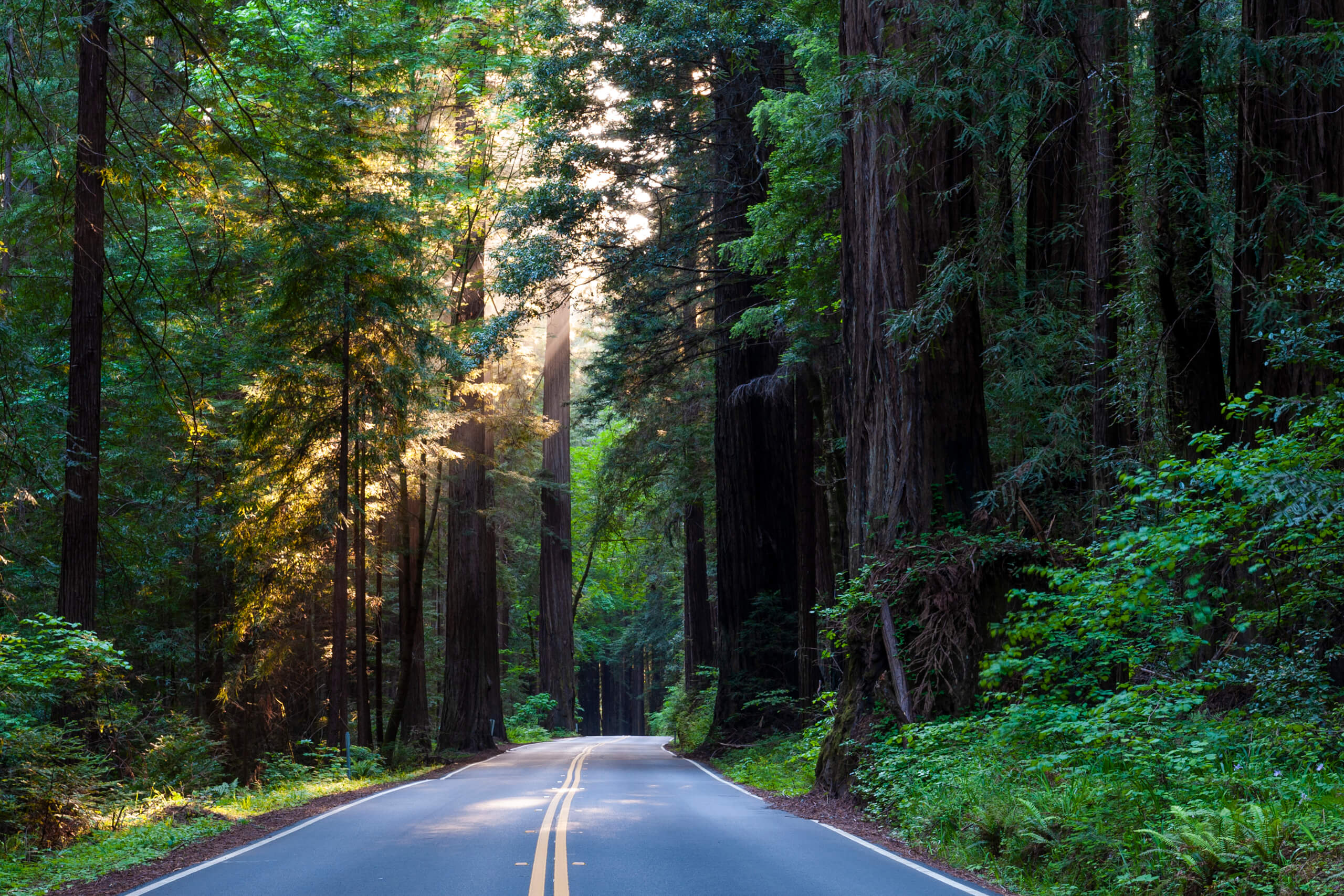 Benbow Historic Inn Avenue of the Giants by Michelle Chaplow